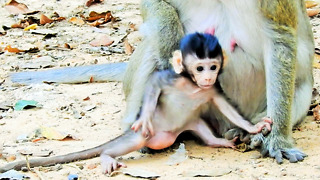 Cute Baby Monkey Patty  - Video