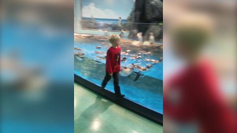 Funny Penguins Follow A Young Boy As He Walks Back And Forth In Front Of Their Tank
