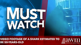 Video footage of a shark estimated to be 50-years-old - Video