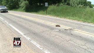 Roadkill littering roadways, what's the policy for picking it up? - Video