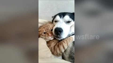 Best friends forever: Cat and dog snuggle together on sofa