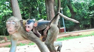 Baby Monkey Nearly Died Because Of Kidnapper