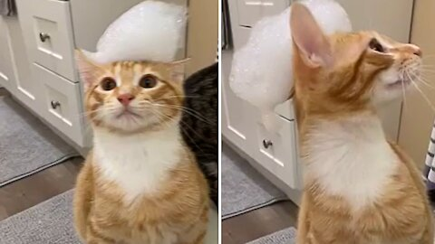 Bewildered cat becomes broken when bath bubbles on its head