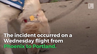 Child Bit on Southwest Airlines Flight by Emotional Support Dog - Video