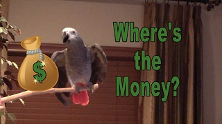 Einstein the Parrot evidently loves money! - Video