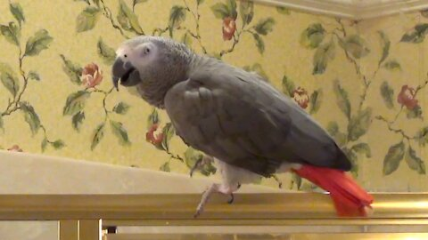 Sassy parrot tells his owner to be quiet