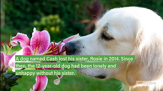 Dog Was Miserable After The Loss Of His Sister, Got A Pleasant Present For Christmas