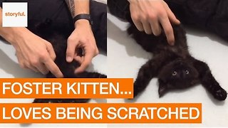 Cute Kitten Loves Having Belly Her Rubbed - Video