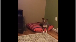 Dog flawlessly closes door on command - Video