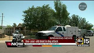 Child dead after dog attack in south Phoenix - Video