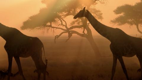 Discover the Safari of Zambia