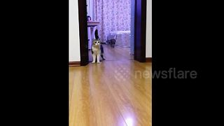 Man Tries To Prank Cat With Tape, But Cat Is Smarter Than That - Video