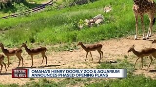 Zoo Reopening Plans