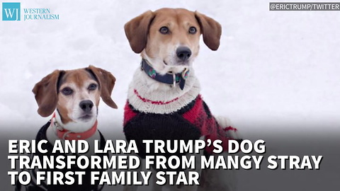 Eric And Lara Trump's Dog Transformed From Mangy Stray To First Family Star