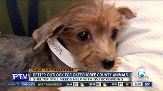 Better outlook for Okeechobee County animals - Video