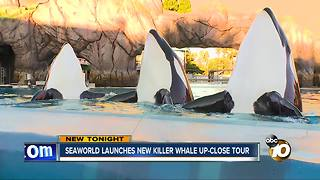 Seaworld launches Killer Whale Up-Close Tour - Video