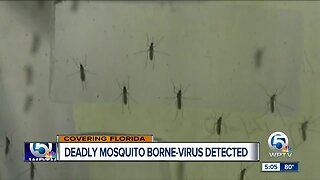 Deadly mosquito-borne virus detected in Florida