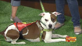 Keep Your Pets Cool, and Entertained, This Summer - Video