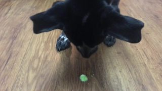 Dog tries various candies, selects his favorite