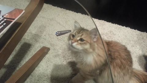 Funny Cat Tries To Reach A Nail Clipper On A Glass Table