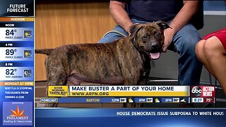 Rescues in Action Oct. 6 | Buster needs a buddy