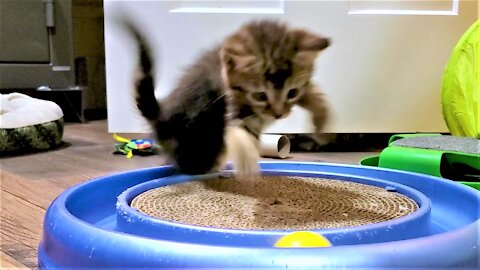 Rescued kittens have a blast on their first night at their sanctuary
