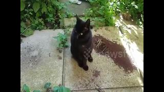 """Talking cat greets owner """"hello"""""""