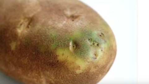 Why You Shouldn't Eat Potatoes When They Look Like This