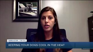 Keeping Your Dogs Cool with Hounds Town USA