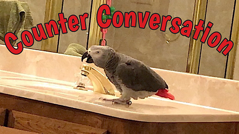 Clever parrot has very intriguing conversation