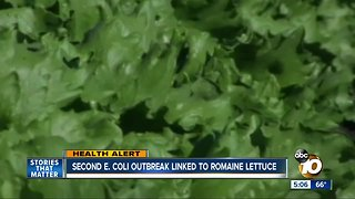 Second E.coli outbreak this year linked to romaine lettuce