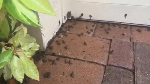Palm Beach Gardens community concerned over outbreak of toads
