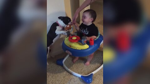 Baby Loves Getting Kisses from Dog