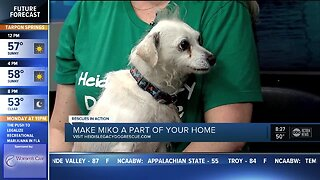 Rescues in Action Jan. 5 | Miko needs full-time home