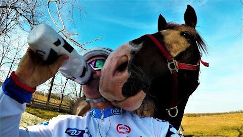 Horses are heart-warming yet very funny animals