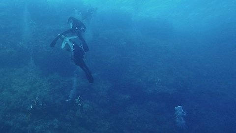 British holidaymaker captures shark attack as oceanic white tip clamps on to diver's leg and needs to be wrestled off