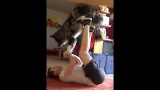 Australian Shepherd & owner perform crazy acroyoga trick