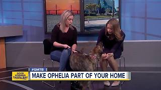 Rescues in Action: Ophelia - Video