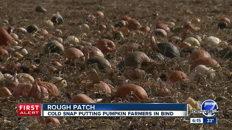 Pumpkin patches bracing for more snow