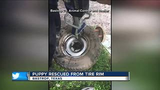 Puppy rescued from tire rim