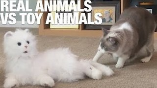 Attack of the Clones! Real Animals Vs. Toy Animals - Video