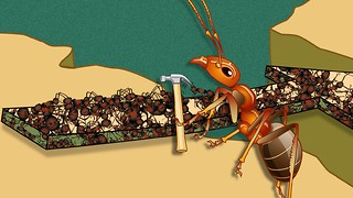 HowStuffWorks Animations: How Fire Ants Helped Ant-Man - Video