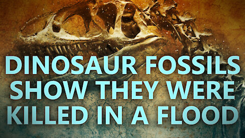Dinosaur fossils suggest they were killed in a flood