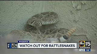 Man gets bitten by rattlesnake while protecting his dog - Video