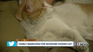 Family searching for person who choked cat - Video