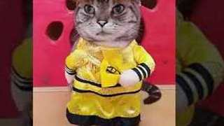 Cat Is 'Non-Puss-Ed' by His Cute Outfit - Video