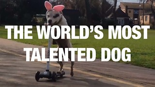 The World's Most Talented Dog - Video