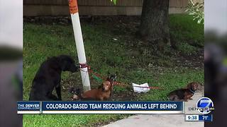 A Colorado pet rescue national disaster response team is headed to Florida - Video