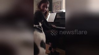 Just call her Feline Dion! Cat nails 'My Heart Will Go On' rendition - Video