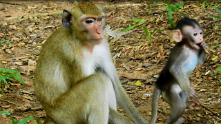 The Baby Monkey Standing Looking For Mother - Video